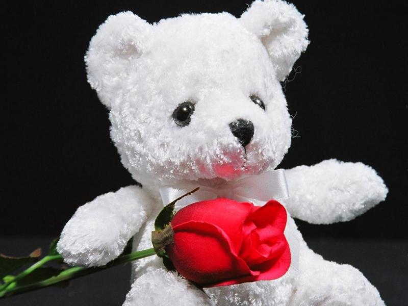 Bear & rose