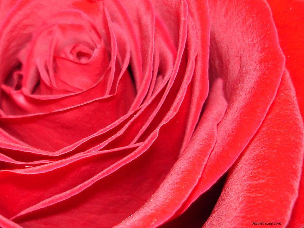Red Roseeeee