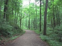 Landscape Wallpaper - Quite Forest road