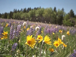 Flower Wallpaper - Wild flower field