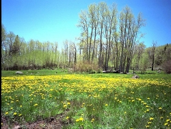 Flower Wallpaper - Flowers field
