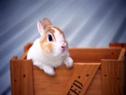 Animal Wallpaper - Little bunny