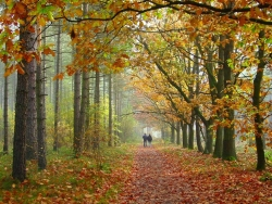 Landscape Wallpaper - Autumn leaves