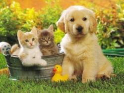 Animal Wallpaper - Dog - Cat