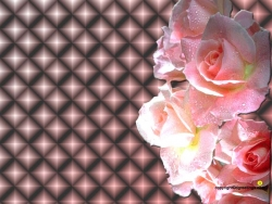 Valentine/Love Wallpaper - Sparkling roses