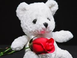 Valentine/Love Wallpaper - Bear & rose