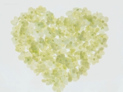 Valentine/Love Wallpaper - Sweet hearttt!