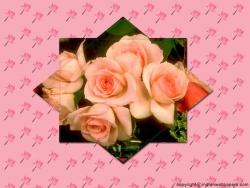 Valentine/Love Wallpaper - Rosesss!!